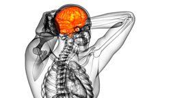 Brain activity and heart disease 大脑活动与心脏疾病之间的联系