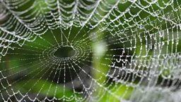 Blow the cobwebs away 振作精神