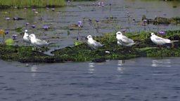 Bird-watchers in Uganda and happy kids 乌干达湿地观鸟、荷兰儿童快乐的秘密