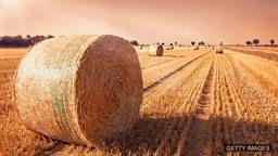 Make hay while the sun shines 趁热打铁