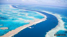 "Two-thirds of Great Barrier Reef damaged in 'unprecedented' bleaching 三分之二的大堡礁珊瑚群遭受""史无前例""的白化危机"