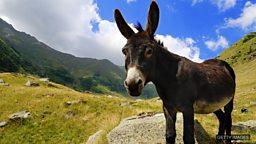 Donkey's years 很长时间