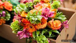"Ancestor of all flowers revealed by scientists 科学家揭示花卉""祖先""的样貌"