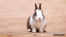 "Happy bunny 快乐兔指""快乐的人"""