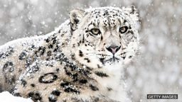 "Latest 'endangered species' list published 最新""濒危物种""名单公布于众"