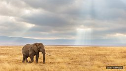 Size matters when it comes to extinction risk 动物的体型可能是决定其灭绝的关键因素