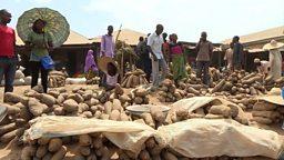 Nigeria: world's biggest yam producer 尼日利亚山药产量居世界第一位
