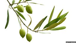 To offer an olive branch 伸出橄榄枝主动和解