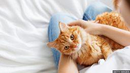 """小测验 — 和""""猫""""有关的词汇"""