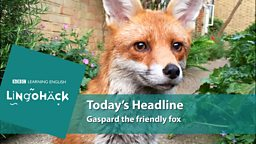 Gaspard the friendly fox