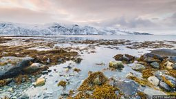 Taller plants moving into warmer Arctic 长得较高的植物向更温暖的北极地区移动