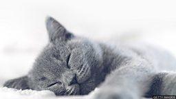 """小测验 — 和 """"睡眠"""" 有关的英语词组"""