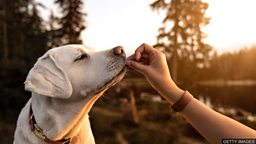 Climate change: Will insect-eating dogs help? 应对气候变化:让宠物狗改吃虫子