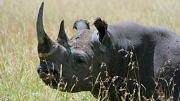 Rhinos taken back to Rwanda