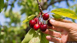 Cherry-pick 择优挑选