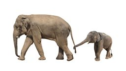 Baby elephant zoo trade banned