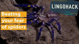 Beating your fear of spiders