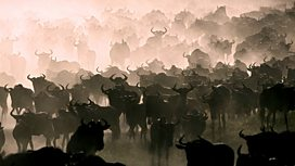 Image for The Great Migration