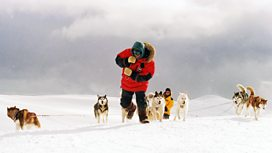Image for Eight Below