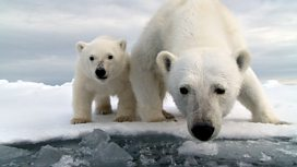Image for Polar Bear: Spy on the Ice
