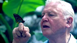 Image for Attenborough's Ark: Natural World Special
