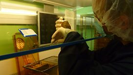 Behind the scenes: Inside an animal research laboratory