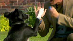 Nelly the dog giving Zak a high-five