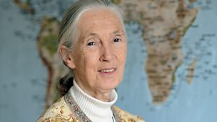 Image for Dame Jane Goodall
