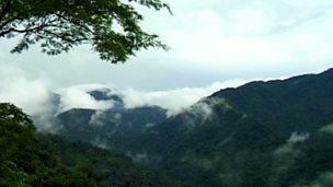 Rainforest processes - Costa Rica