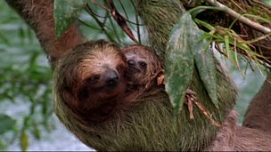 Image for Moths and sloths