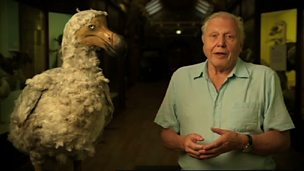 Image for Attenborough's Ark