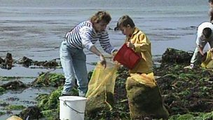 Seaweed harvesting and fishing in Brittany