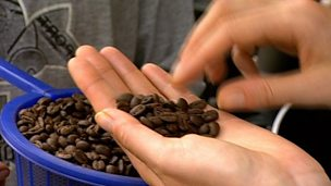 The impact of coffee bean farming on the Mexican rainforest