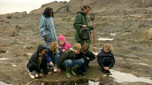 What do you find in a rockpool?