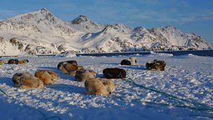 Greenland's retreating sea ice