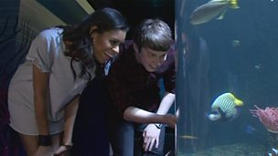 Image for AlunaGeorge visit the aquarium