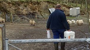 Environmental problems with sheep dipping