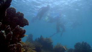 Life under the ocean