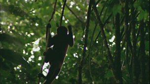 Guyana's rainforests