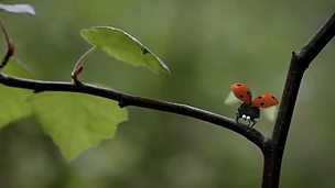 Image for Ladybird flying lessons