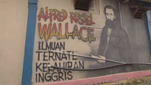 Image for The Wallace graffiti