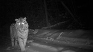 Image for Camera traps at night