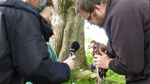 Image for Caroline Nolan joins Adam McClure on the RSPB Red Kite Tagging Project