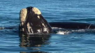 Image for Insider Guide: Whale watching