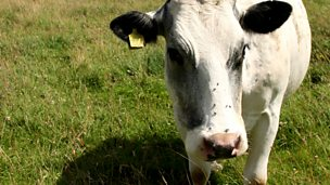 Image for How to connect a cow to the internet