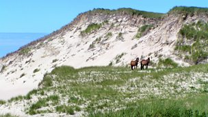 Image for Sable Island: A Dune Adrift