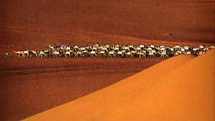 Image for Mauritania - The Festival of Nomad Music