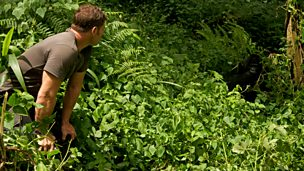 Steve Backshall looking at a gorilla