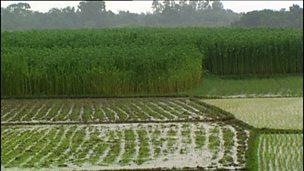 The wet season in Bangladesh