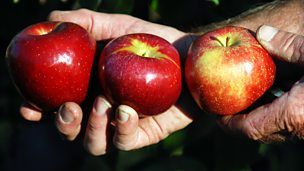 Image for Picking Round Apples